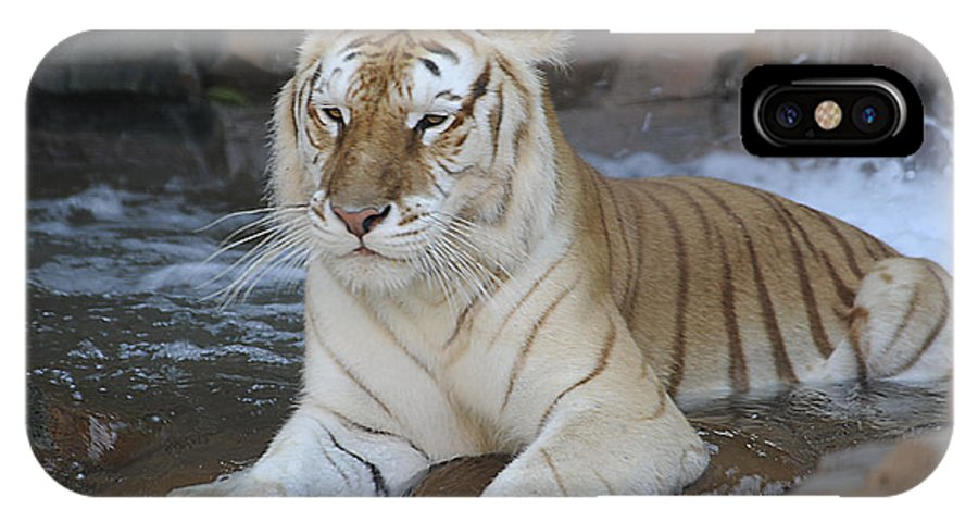 IPhone X Case featuring the photograph Tigress by Keith Lovejoy