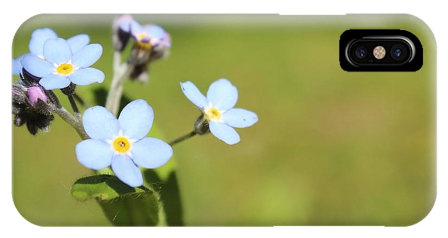 Flowers IPhone X Case featuring the photograph Tiny Blues by Sue Chisholm