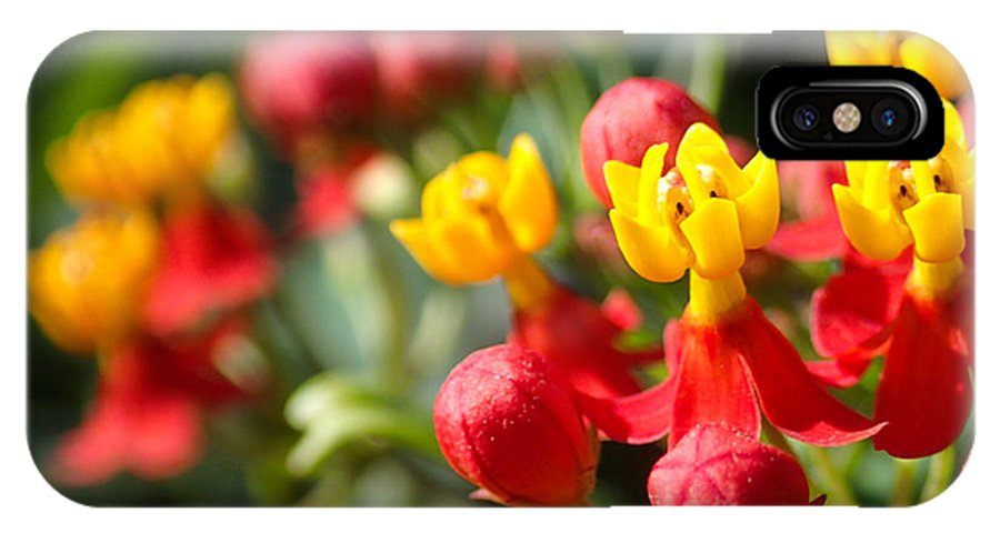 Flower IPhone X Case featuring the photograph Tiny Buds by Tyler Lucas