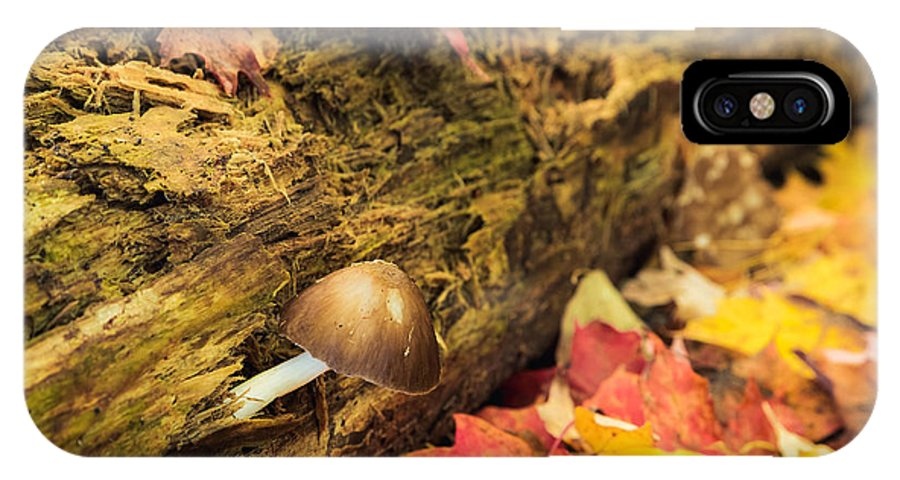 Mushroom IPhone X Case featuring the photograph Tiny by Mary Smyth