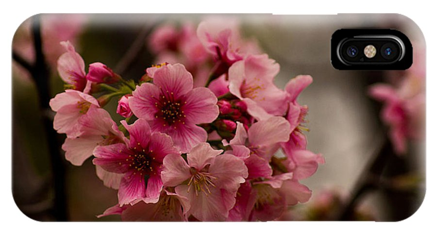 Flower IPhone X Case featuring the photograph Tiny Pink Blossoms by Lorenzo Williams