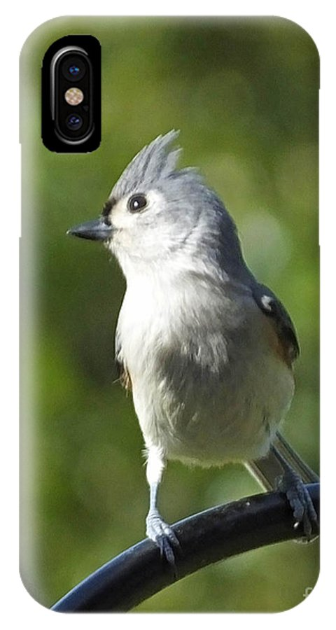 Bird IPhone X Case featuring the photograph Titmouse  by Lizi Beard-Ward