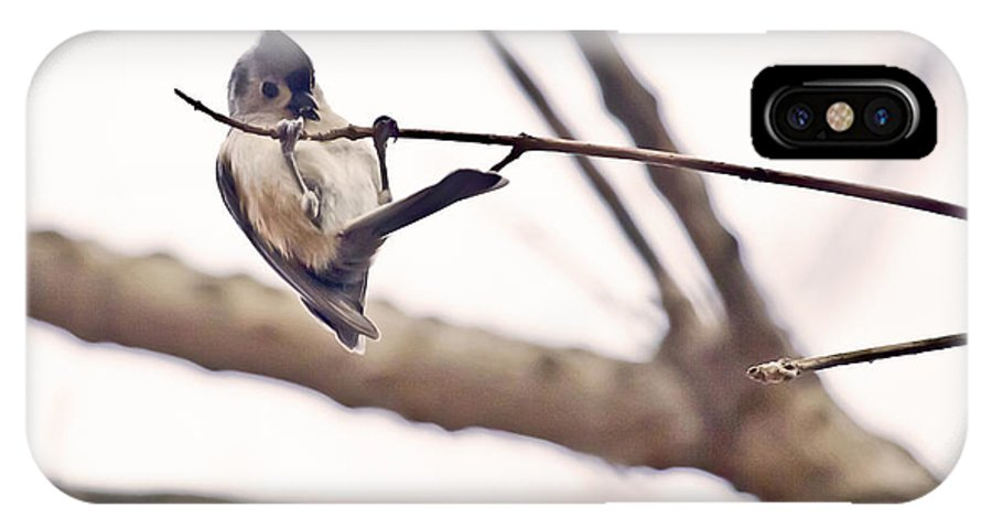 Billy Goat Trail IPhone X Case featuring the photograph Titmouse Pull-ups by Francis Sullivan