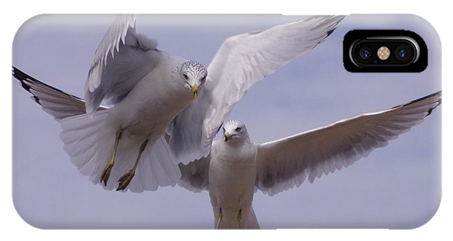 Seagulls IPhone X Case featuring the photograph Together by Joe Tanoury