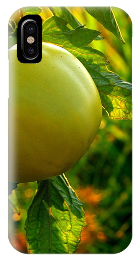 Green Tomato IPhone X Case featuring the photograph Tomato On The Vine by Michelle Cawthon