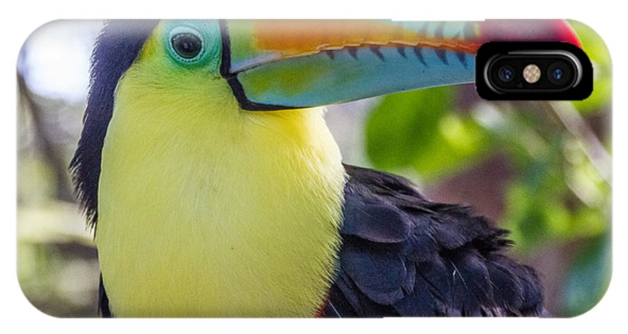 2014 IPhone X Case featuring the photograph Toucan by Deidre Elzer-Lento