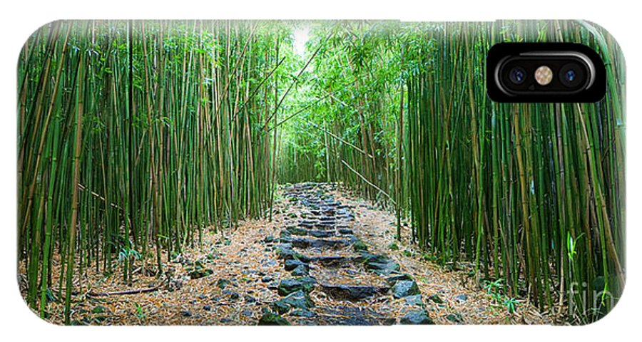 Amazing IPhone X Case featuring the photograph Trail through Bamboo Forest by M Swiet Productions
