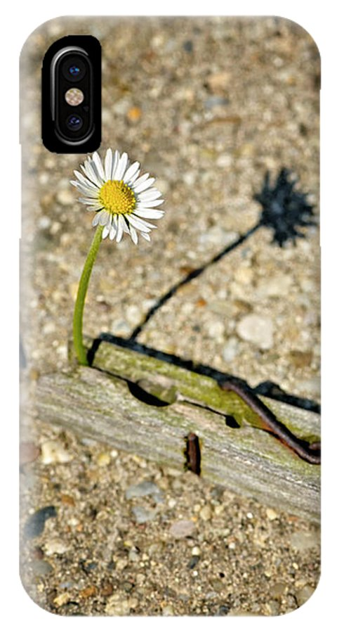 Season IPhone X Case featuring the photograph Trapped White Daisy by Jozef Jankola