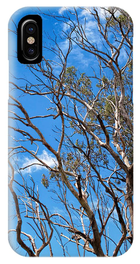 Hawaii IPhone X Case featuring the photograph Tree 8 by Dawn Eshelman