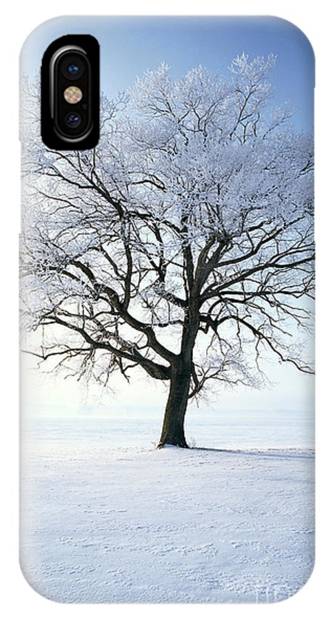 Plant IPhone X / XS Case featuring the photograph Tree Covered In Hoar Frost by David Davis