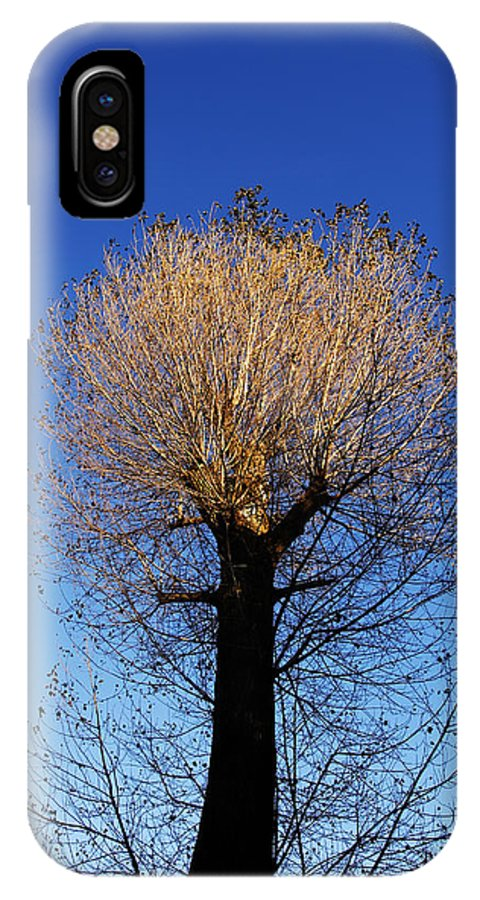 Autumn IPhone X Case featuring the photograph Tree In Afternoon Sunlight by Steve Ball