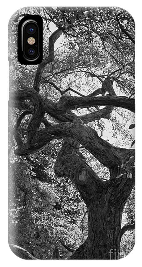 Tree IPhone X Case featuring the photograph Tree In Prescott Park - Bw by K Hines