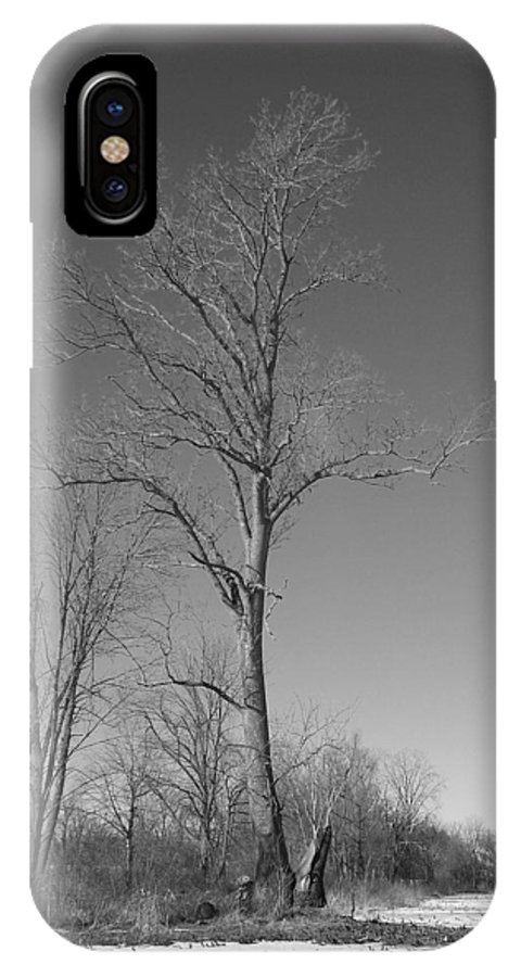 Tree IPhone X Case featuring the photograph Tree in Winter by Michelle Miron-Rebbe