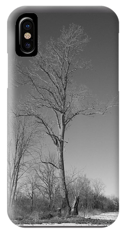 Tree IPhone Case featuring the photograph Tree In Winter by Michelle Miron-Rebbe