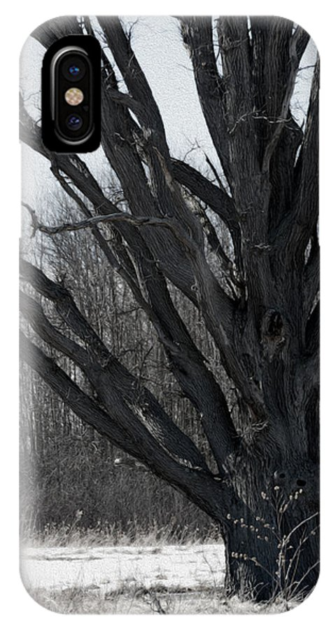 Winter Tree IPhone X Case featuring the photograph Tree In Winter by Tracy Winter