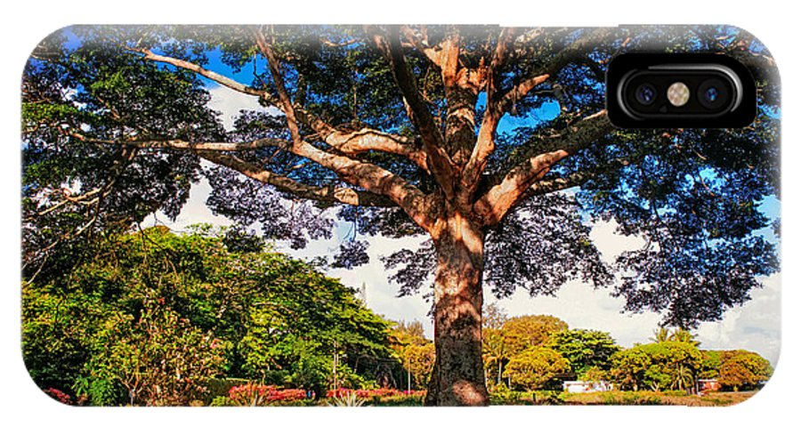 Maurituis IPhone X Case featuring the photograph Tree Of Joy. Mauritius by Jenny Rainbow
