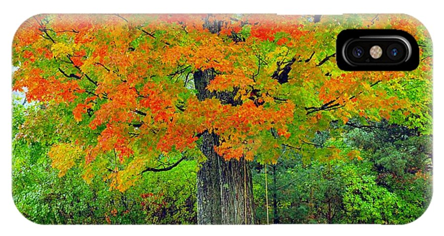 Tree IPhone X Case featuring the photograph Tree Swing by Terri Gostola