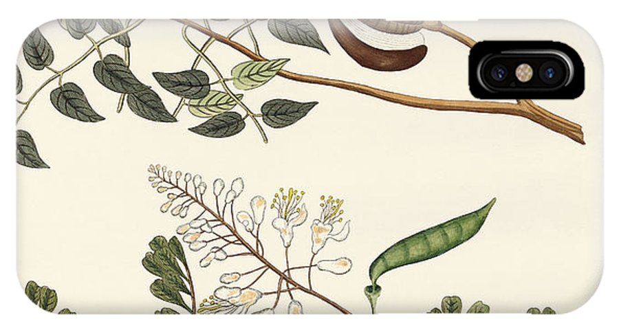 Mahogany IPhone X Case featuring the drawing Trees From Hot Countries by Splendid Art Prints