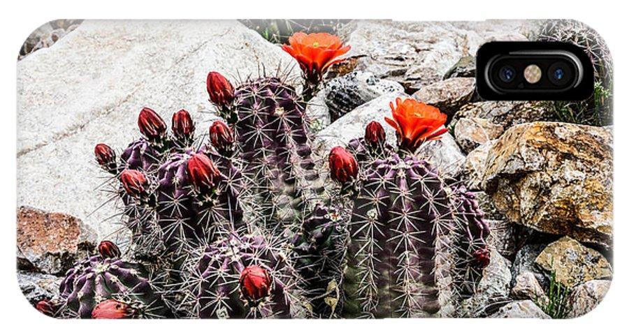 Trichocereusm IPhone X Case featuring the photograph Trichocereus Cactus Flowers by Michael Moriarty