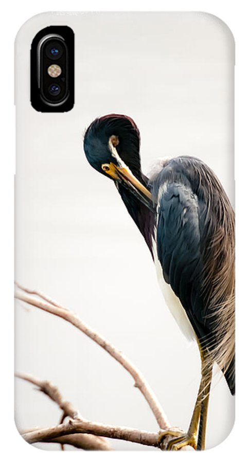 Card IPhone X Case featuring the photograph Tricolored Heron Card by Mark Baker