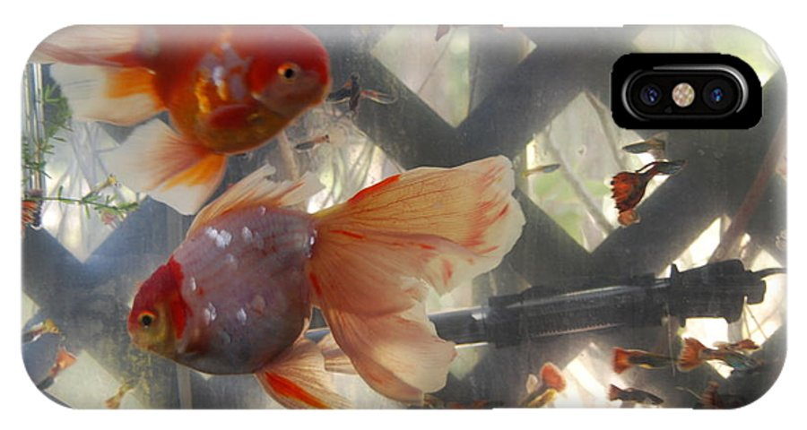 Taken Through Side Of Aquarium IPhone X Case featuring the photograph Triple Tail Goldfish by Robert Floyd