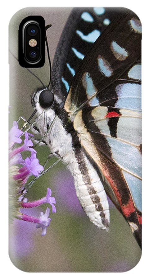 Butterfly IPhone X / XS Case featuring the photograph Tropical Butterfly by Chris Scroggins
