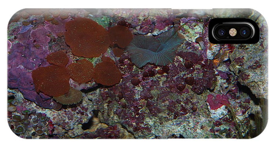 Taken Through Glass Side Of Aquarium IPhone X Case featuring the photograph Tropical Coral by Robert Floyd