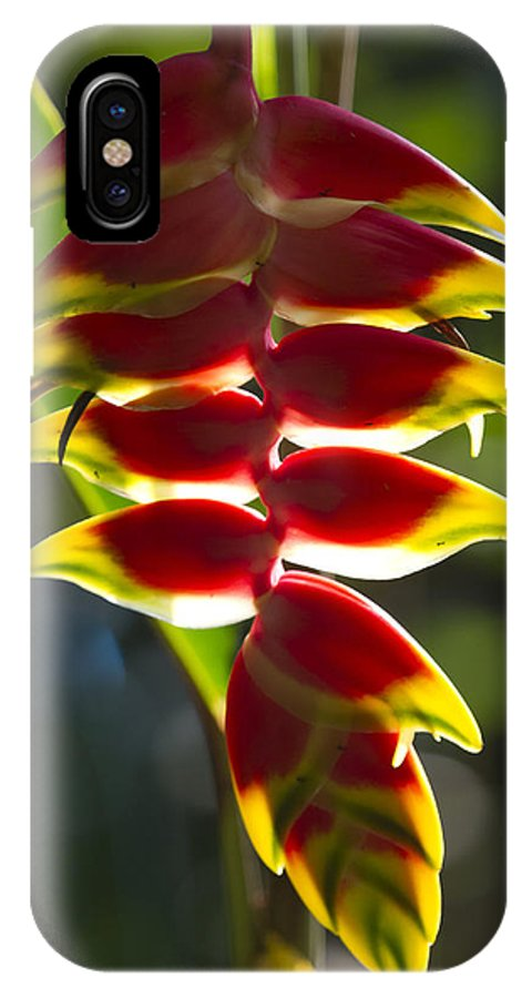 Tropical Flower IPhone X Case featuring the photograph Tropical Flower 1 by Russell Millner