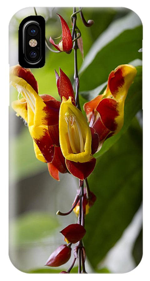 Tropical Flower IPhone X Case featuring the photograph Tropical Flower 3 by Russell Millner