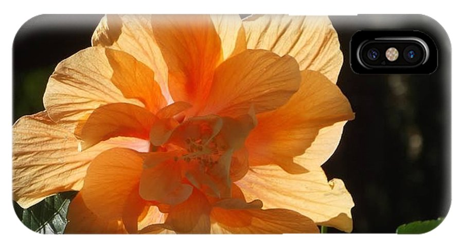 Beautiful Orange Hibiscus Flower IPhone X Case featuring the photograph Tropical Hibiscus In The Sun by Sylvia Herrington