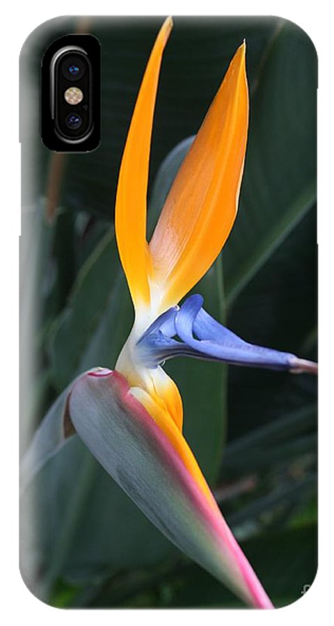 Bird Of Paradise IPhone X Case featuring the photograph Tropical Touch by Geri Glavis