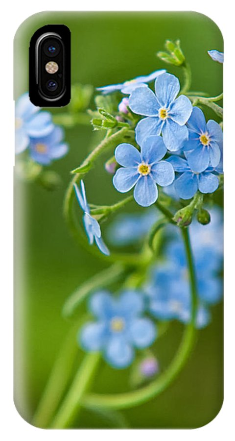 Angiosperms IPhone X Case featuring the photograph True Forget-me-not by Rich Leighton
