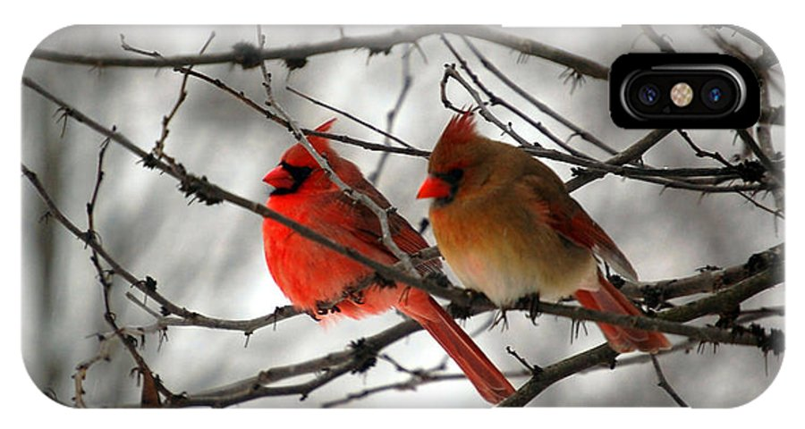 Cardinals IPhone X Case featuring the photograph True Love Cardinal by Peggy Franz