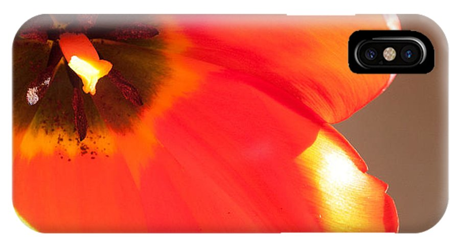 Tulip IPhone X Case featuring the photograph Tu Close by Michael Hope