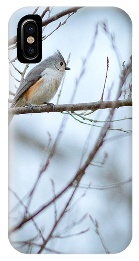 Tufted Titmouse IPhone X Case featuring the photograph Tufted Titmouse by Melinda Fawver