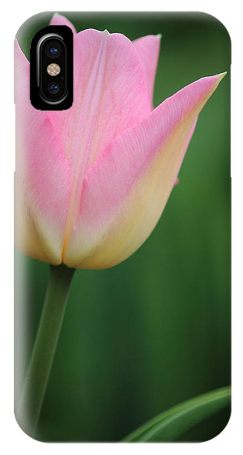 Tulip IPhone X Case featuring the photograph Tulip by Andrew Pacheco