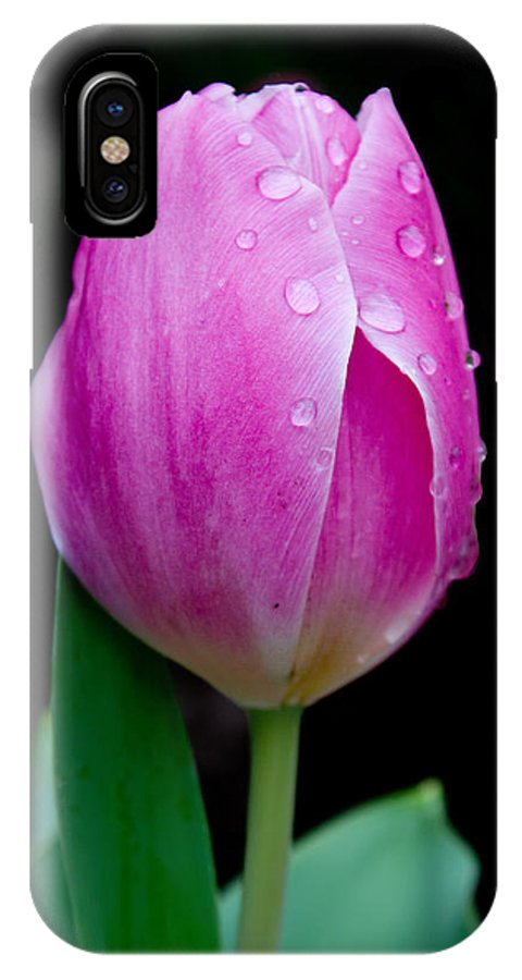 Tulip IPhone X Case featuring the photograph Tulip Droplets by Katherine Hawkins