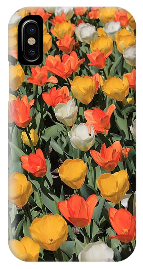 Flowers IPhone X Case featuring the photograph Tulip Stretch by Michael Saunders