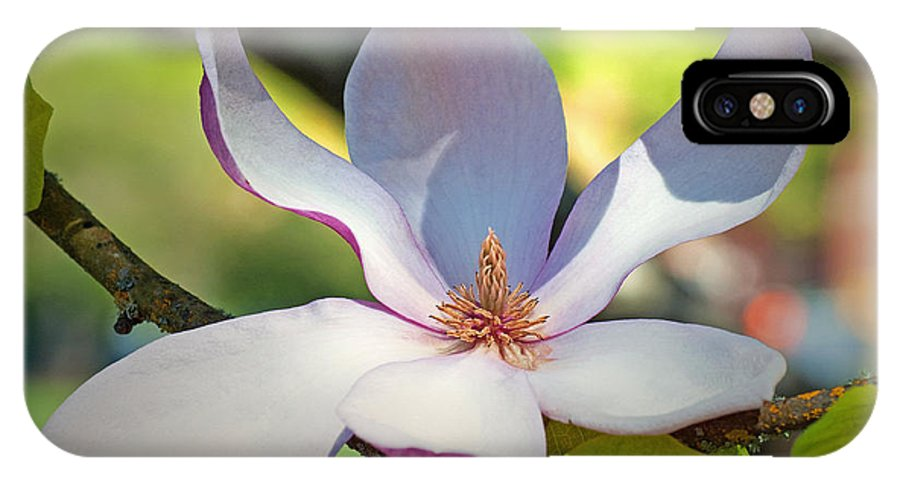 Tulip Tree Flower Magnolia Pink White Yellow Green Branch Nature Beauty Delicate Petal Petals Leaves Spring Bloom Oregon Gwyn Newcombe IPhone X Case featuring the photograph Tulip Tree Bloom by Gwyn Newcombe