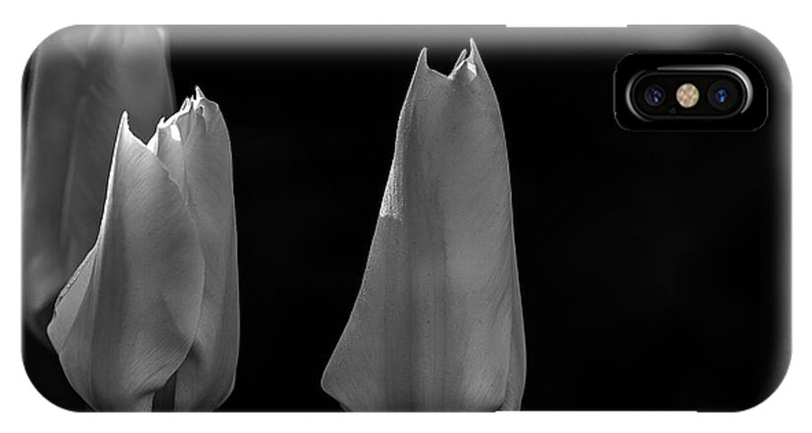 Tulips IPhone X Case featuring the photograph Tulips by Donald Gargano