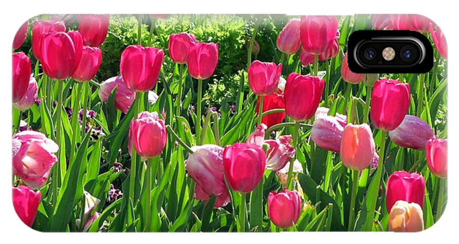 Tulip IPhone X Case featuring the photograph Tulips - Field With Love 54 by Pamela Critchlow