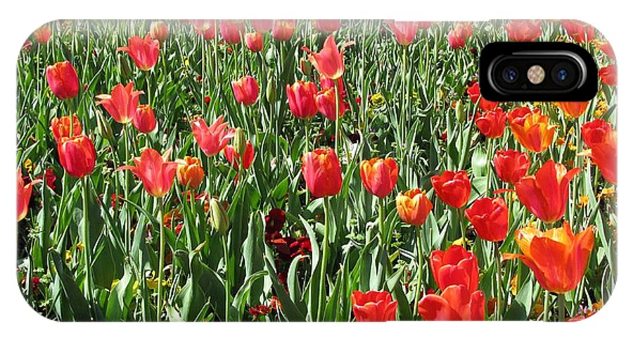 Tulip IPhone X Case featuring the photograph Tulips - Field With Love 61 by Pamela Critchlow