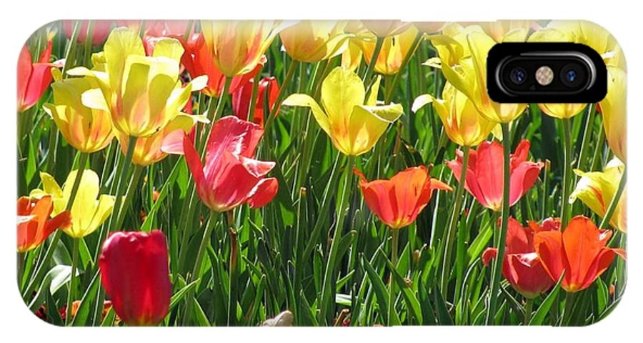 Tulip IPhone X Case featuring the photograph Tulips - Field With Love 65 by Pamela Critchlow