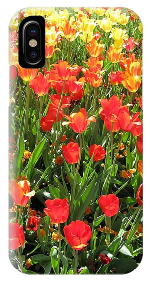 Tulip IPhone X Case featuring the photograph Tulips - Field With Love 68 by Pamela Critchlow