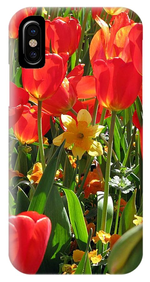Tulip IPhone X Case featuring the photograph Tulips - Field With Love 71 by Pamela Critchlow