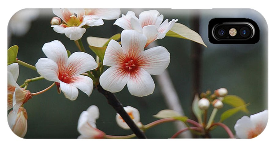 Tung Oil IPhone Case featuring the photograph Tung Oil Blossoms by Suzanne Gaff