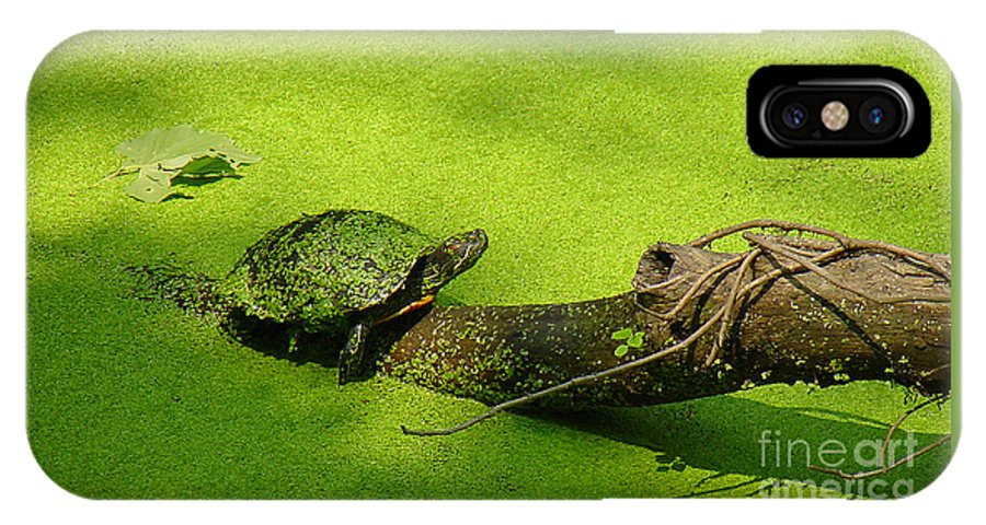 Turtle IPhone X Case featuring the photograph Turtle-190 by Gary Gingrich Galleries