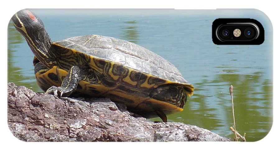 Turtle IPhone X / XS Case featuring the photograph Turtle At The Lake by Nina Kindred