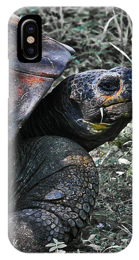 Turtle IPhone X Case featuring the photograph Turtle by Joel De la torre