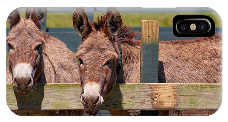 Twin Donkeys IPhone X Case featuring the photograph Twin Donkeys by Mary Almond